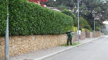 Manteniment de gespes naturals a girona punxar escarificar - Jardineria la font ...